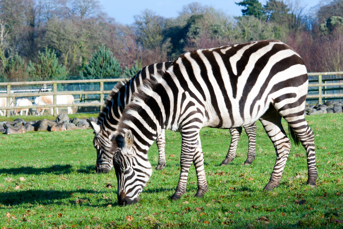 Travel Photos: Ireland, Cork, Fota wildlife park
